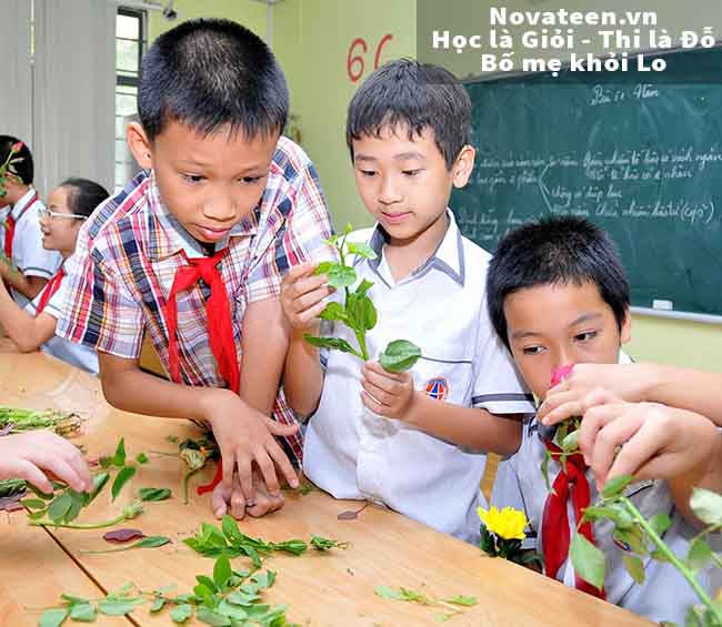 chương trình giáo dục phổ thông mới sẽ có nhiều tiết thực hành hơn