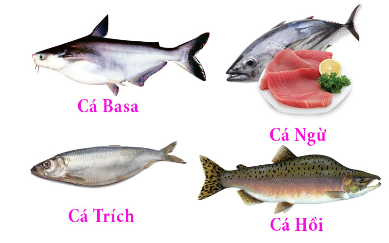 Cá có chứa nhiều axit omega 3 tăng cường trí nhớ cho sĩ tử
