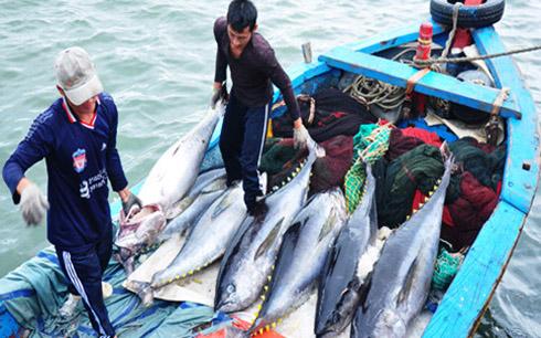 Đánh cá thu ngoài biển Đông