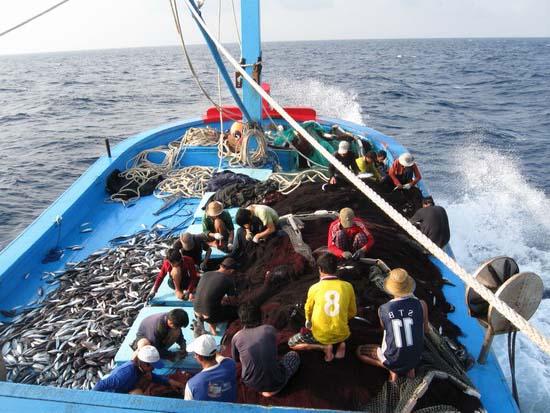 Thuyền đầy ắp cá sau những giờ lao động mệt nhọc là niềm vui của ngư dân